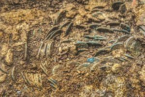Sopra: immagini di parte delle 4.166 monete romane ritrovate a Ueken (da www.rsi.ch).
