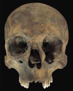 Calleva, cranio
