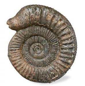 Ammonite snakestone
