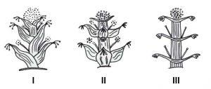 Le categorie (I, II, III) di silfio